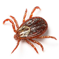 bug_guide_ticks